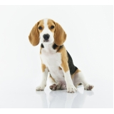local de clínica veterinária para cachorro Jardim São Domingos