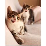 onde comprar vacina para gatos Alto do Taquaral