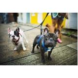 onde encontro clínica veterinária para cachorro Parque da Figueira