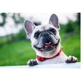 quanto custa consulta veterinária para animais de estimação Jardim Baronesa