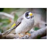 quanto custa consulta veterinária para aves Vila São Bento