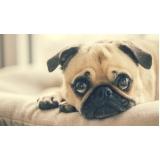 quanto custa consulta veterinária para cães pequenos Jardim Miranda