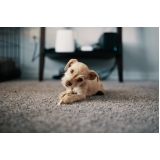 vacina para cães à venda Jardim Ouro Branco
