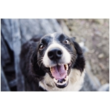 vacina para cães Jardim Tamoio