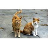 vacina para gatos Jardim Campo Belo I