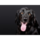 vacina veterinária v10 para cães Cambuí