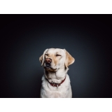 vacinas para cães Vila San Martin