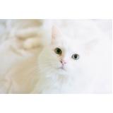 vacina para gatos