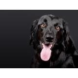 valor de consulta veterinária para animais de estimação Parque Camélias