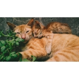 valor de consulta veterinária para animais idosos Jardim do Lago II