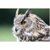 valor de consulta veterinária para animais silvestre Parque Jambeiro