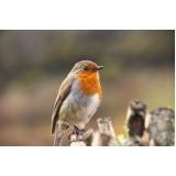 valor de consulta veterinária para aves Ponte Preta