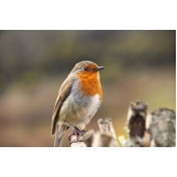 valor de consulta veterinária para aves Vila Industrial
