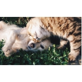 valor de consulta veterinária para cães e gatos Jardim Esmeraldina