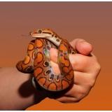 veterinário de animais silvestres sob agendamento Vila Rossi e Siqueira