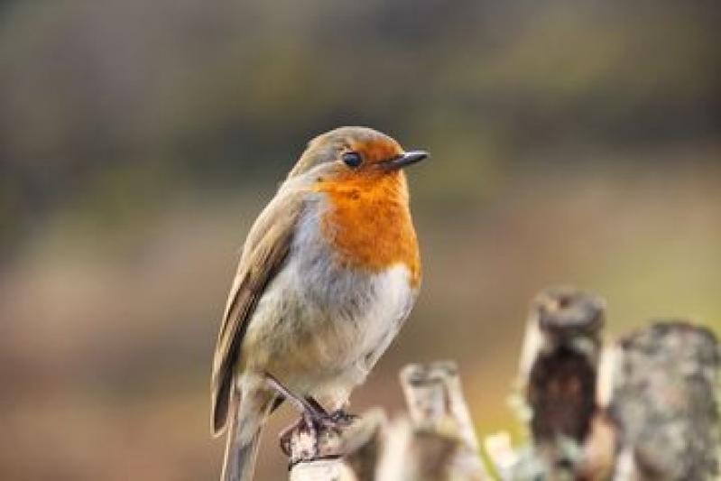 Valor de Consulta Veterinária para Aves Jardim Planalto - Consulta Veterinária Animais de Estimação