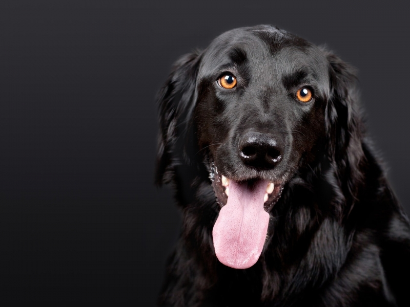 Valor de Emergência Animal Jardim São Vicente - Emergência Canina