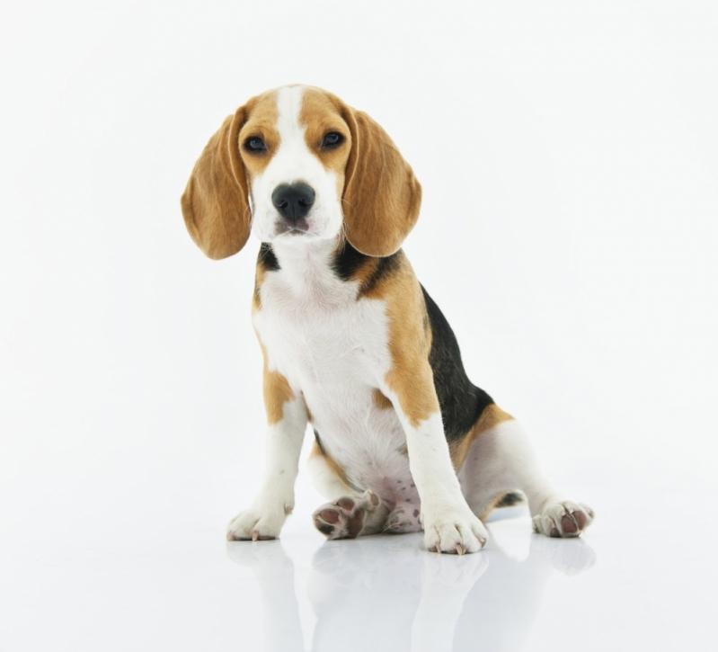 Veterinário com Atendimento Clínico Bonfim - Veterinário Especialista em Filhotes