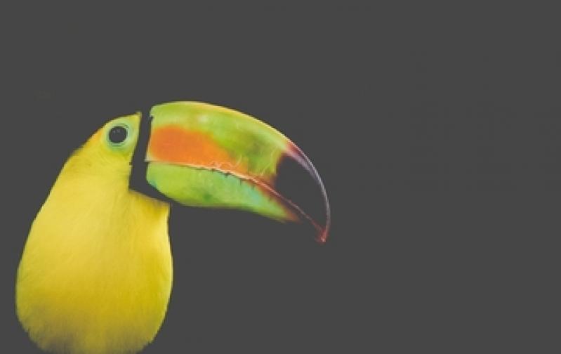Veterinário de Animais Silvestres São Bernardo - Veterinário Especialista em Filhotes