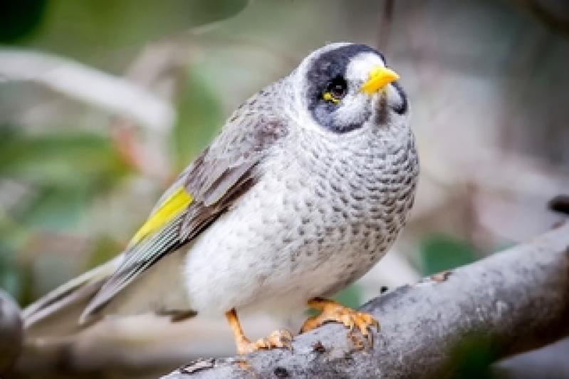 Veterinário de Aves sob Agendamento Cidade Jardim - Veterinário com Internação